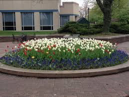 plant spring flowers now buck and sons landscape services