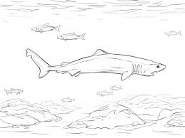 crocodile shark coloring free printable coloring pages
