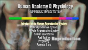 Private Parts Female Anatomy Human Anatomy U0026 Physiology Introduction To Human Reproductive