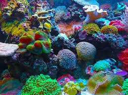 free images coral reef invertebrate habitat salt water