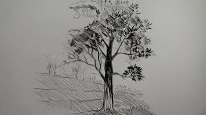 pencil drawing of a tree how to draw a tree using pencil a simple