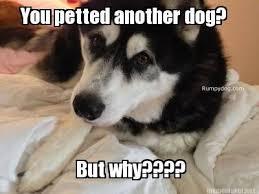 Happy Weekend Meme - pretty happy weekend meme friday memes featuring rumpy rumpydog