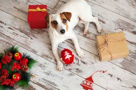 kettering dog walkers gifts for pet lovers and pets alike