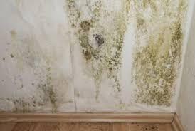 schimmel im schlafzimmer entfernen schimmel entfernung richtig schnell einfach informiert
