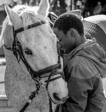 the jockey club thoroughbred incentive program