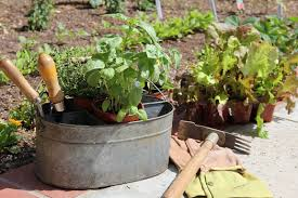 10 steps for starting your home vegetable garden pioneer dad