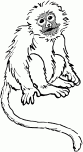 spider monkey colouring pages monkey coloring pages copage