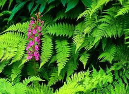 misc fern pink green forest flower best wallpapers for hd 16 9