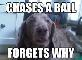 Wiener Dog Meme - funny dog memes fun