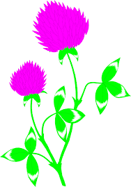red clover free stock photo illustration of a red clover