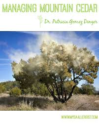 Allergy Map Managing Mountain Cedar Early Treatment Is Key Advanced Allergy