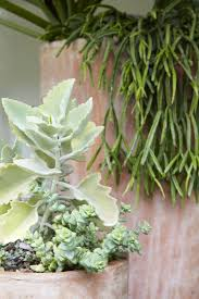 60 best succulents and cacti images on pinterest plants cacti