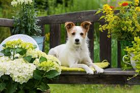 Ideas To Create Privacy In Backyard How To Build The Perfect Backyard For Dogs Mnn Mother Nature