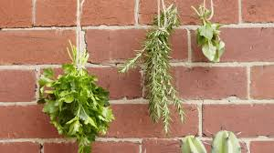 Easy Herbs To Grow Inside Growing Herbs 7 Of The Easiest Herbs To Grow At Home