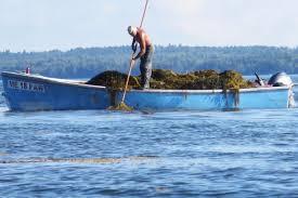 washington county landowners file suit to block rockweed harvest