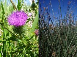 native wetland plants winding science