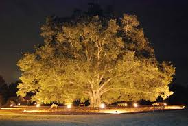 Outdoor Up Lighting For Trees Landscape Lighting Outdoor Contracting