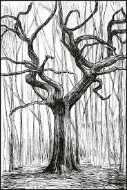 drawings of trees u2013 jacob yona design