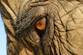 ko stock quote yahoo photo of elephant yahoo search results theverinarian com au i