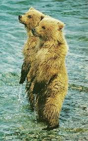 1397 best all da bears images on pinterest animals bear art and