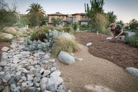 native plants in claremont green grass goes gold la verne magazine