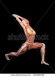 Female Muscles Anatomy Female Muscle Anatomy Dancing 3d Illustration Stock Illustration
