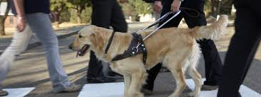 Dogs Helping Blind People South African Guide Dog Association