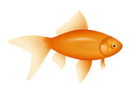 free printable image of fish 80 for coloring pages disney with