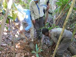 native plants madagascar control of invasive plant species madagascar fauna and flora group