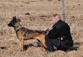 belgian shepherd washington state dv suspect charged with trying to strangle a police dog daily