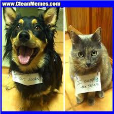 Cat And Dog Memes - i eat socks clean memes