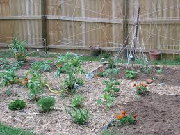 the suburban farmer u2013 vegetable gardens in town steve u0027s notebook
