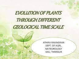 evolution of plants through different geological time scale