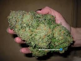 buy edible cannabis online buy marijuana online marijuana for sale marijuana edibles for sale