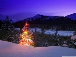 christmas tree forest christmas lights decoration