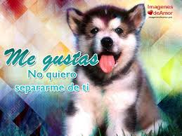 imagenes con frases de amor super tiernas imágenes de perritos con frases de amor súper tiernas