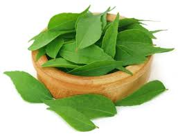 Curry Leaf Plant Diseases - top 8 health benefits of curry leaves you must know