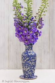 The Flower Vase 30 Best Delphiniums Images On Pinterest Delphiniums Flowers And