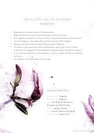 the language of flowers magnolia georgie st clair