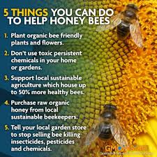 how to help honey bees honey bees buzz u0026 hives pinterest