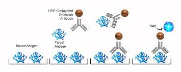 difference between kappa and lambda light chains human lambda light chain elisa kit competitive eia ls f10298