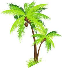 transparent cartoon palm tree free download clip art free clip