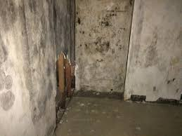 Black Mold On Concrete Basement Walls Central Property Management U2013 Mold Remediation U2013 Fire And Water