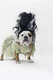 English Bulldog Halloween Costumes Pygmy Marmoset Loves Toothbrush Huffpost