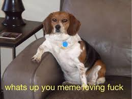 Meme Loving Fuck - what s up you meme loving fuck dogs know your meme