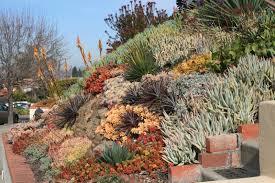 Succulent Rock Garden by Landscaping With Succulents Plant Ideas U2014 Porch And Landscape Ideas