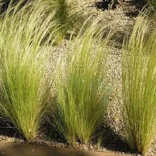200 best grasses images on garden grass ornamental
