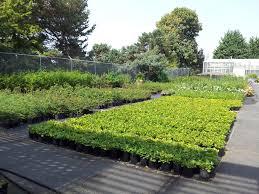 seattle native plants seattle parks u0027 commitment to environmental stewardship often