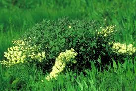 native illinois plants education