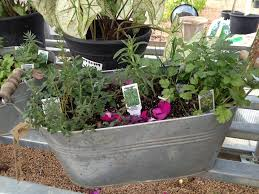 Herb Garden Gift Ideas 107 Best Herb And Plant Gift Ideas Images On Pinterest Gardening
